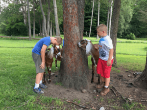 Children interact with the friendly farm animals at the Haven at Skanda.